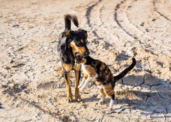 calmants et stimulants pour chien et chat