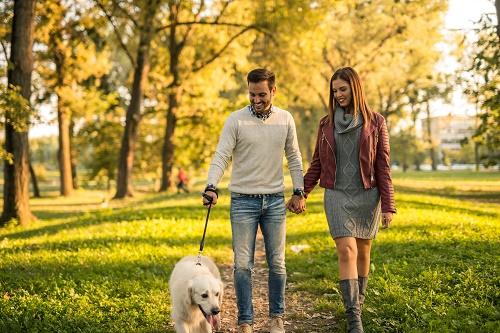Les bienfaits d'une balade chien Haute Loire